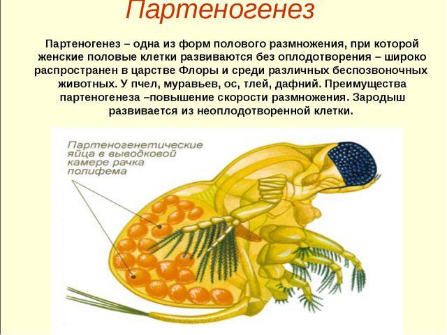 Партеногенез Партеногенез – одна из форм полового размножения, при которой же...