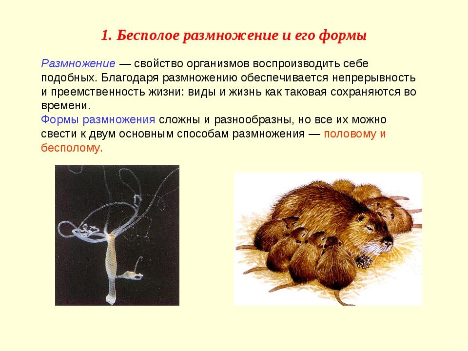 Размножение — свойство организмов воспроизводить себе подобных. Благодаря раз...