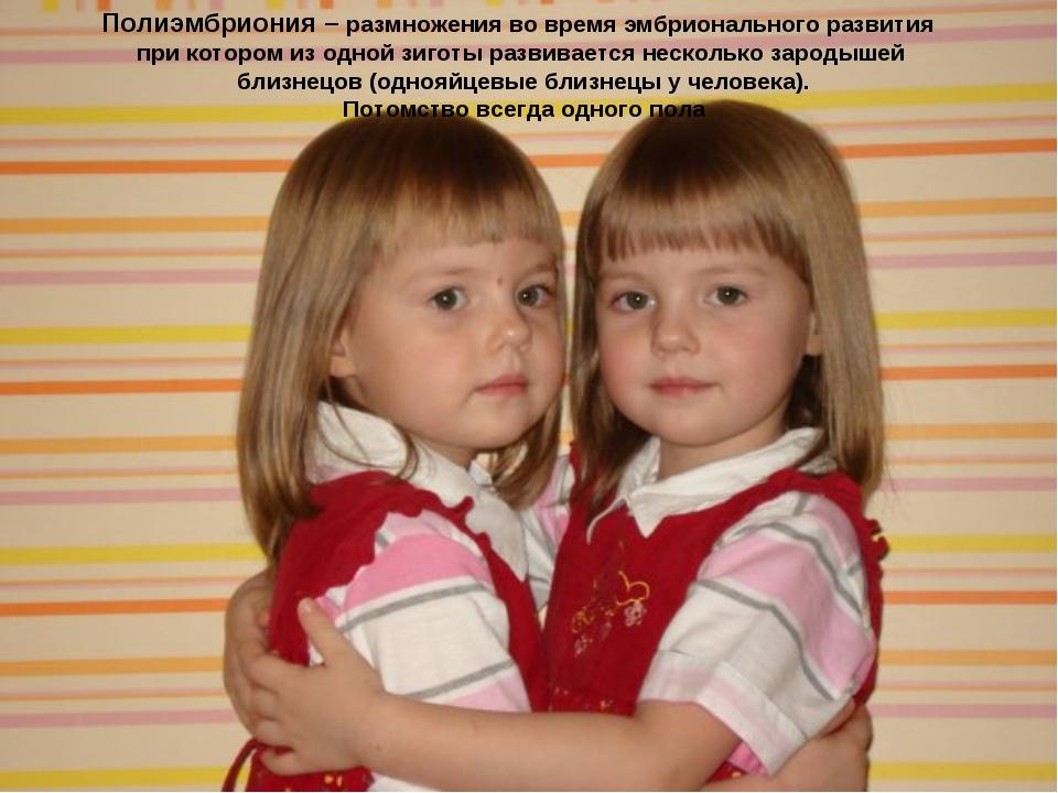 Полиэмбриония – размножения во время эмбрионального развития при котором из о...