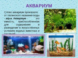 АКВАРИУМ Словоаквариумпроизошло от латинского названия воды -aqua.Аквариу