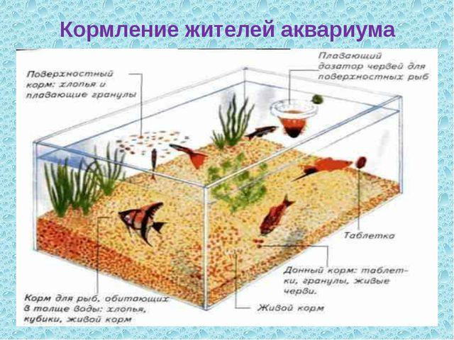 Кормление жителей аквариума