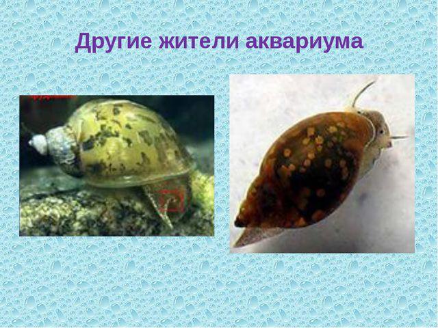 Другие жители аквариума