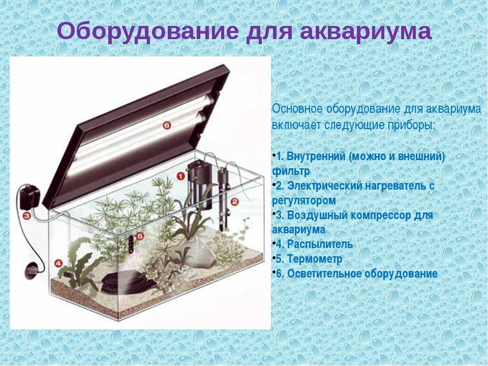 Оборудование для аквариума Основное оборудование для аквариума включает следу...