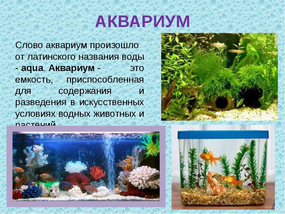 АКВАРИУМ Словоаквариумпроизошло от латинского названия воды -aqua.Аквариу...