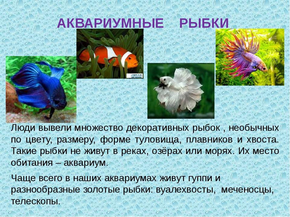 АКВАРИУМНЫЕ РЫБКИ Люди вывели множество декоративных рыбок , необычных по цве...