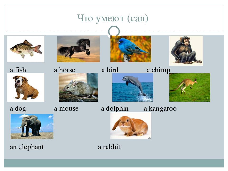 Что умеют (can) a fish a horse a bird a chimp a dog a mouse a dolphin a kanga...
