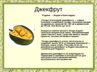 Джекфрут Родина – Индия и Бангладеш. Плоды (соплодия) джекфрута — самые больш