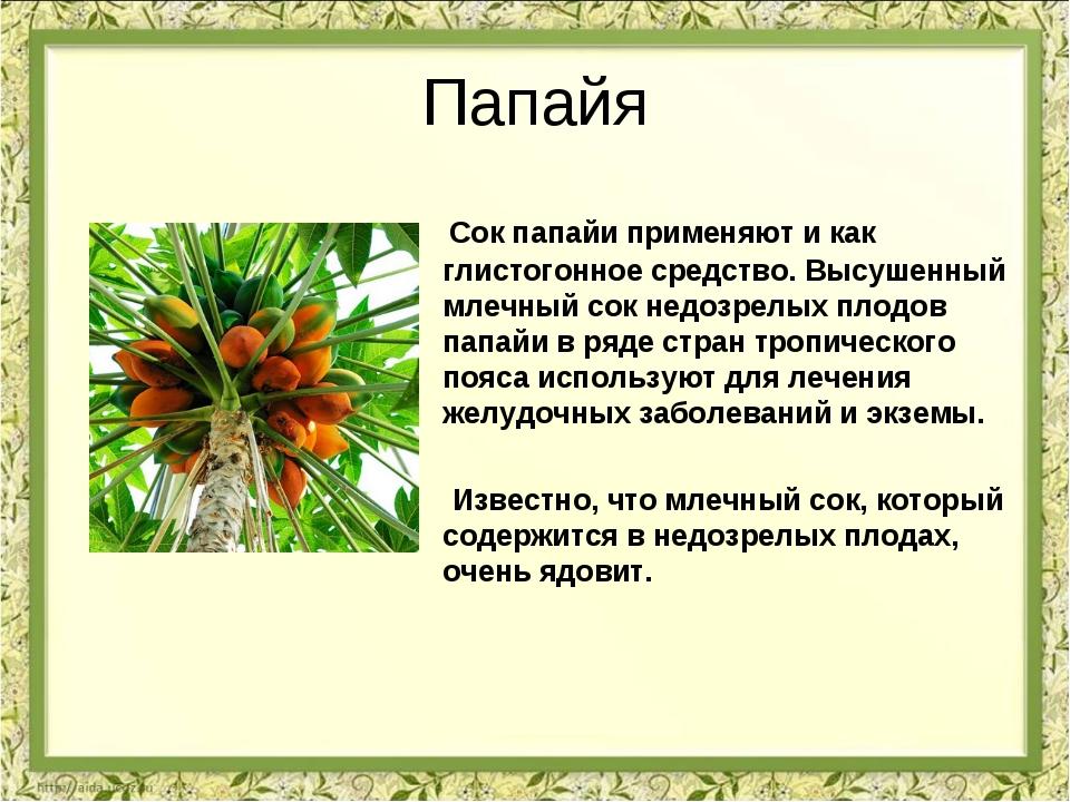 Папайя Сок папайи применяют и как глистогонное средство. Высушенный млечный с...