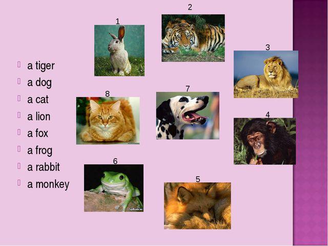 a tiger a dog a cat a lion a fox a frog a rabbit a monkey 1 2 3 4 5 6 8 7