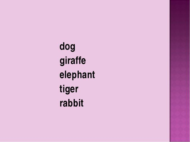 dog giraffe elephant tiger rabbit