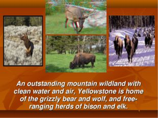 An outstanding mountain wildland with clean water and air, Yellowstone is ho
