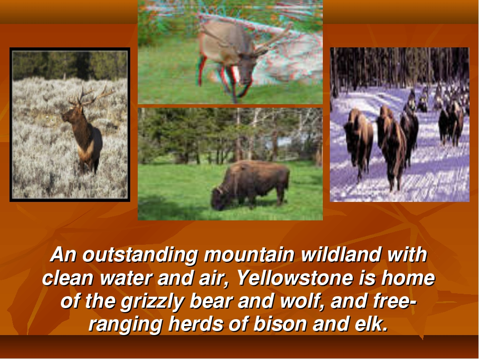 An outstanding mountain wildland with clean water and air, Yellowstone is ho...