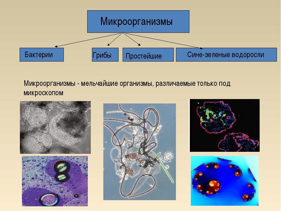 Микроорганизмы - мельчайшие организмы, различаемые только под микроскопом