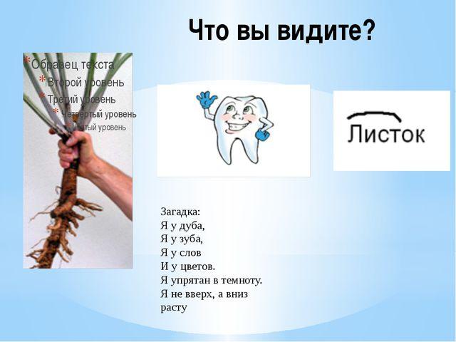 Что вы видите? Загадка: Я у дуба, Я у зуба, Я у слов И у цветов. Я упрятан в...