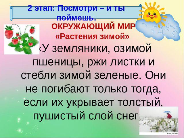 2 этап: Посмотри – и ты поймешь. ОКРУЖАЮЩИЙ МИР «Растения зимой» «У земляники...