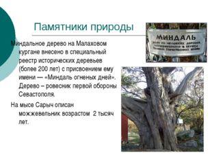 Миндальное дерево на Малаховом кургане внесено в специальный реестр историчес