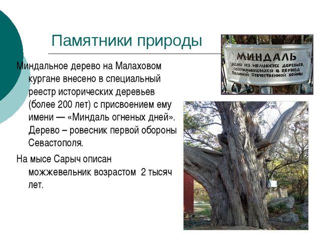 Миндальное дерево на Малаховом кургане внесено в специальный реестр историчес...