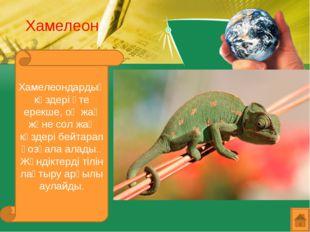 Хамелеон Хамелеондардың көздері өте ерекше, оң жақ және сол жақ көздері бейта