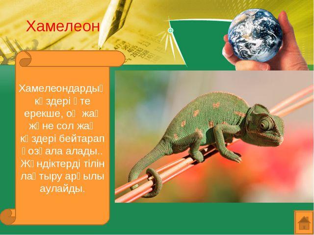 Хамелеон Хамелеондардың көздері өте ерекше, оң жақ және сол жақ көздері бейта...