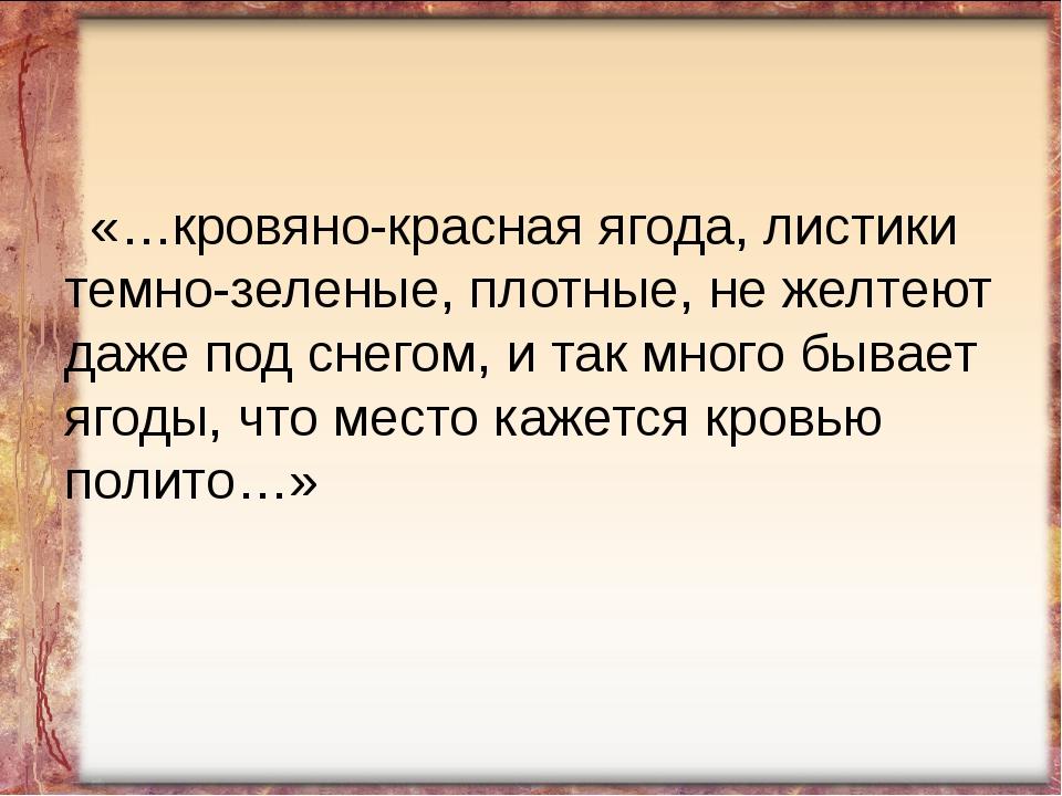 «…кровяно-красная ягода, листики темно-зеленые, плотные, не желтеют даже под...