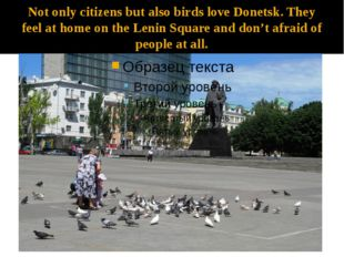 Not only citizens but also birds love Donetsk. They feel at home on the Lenin