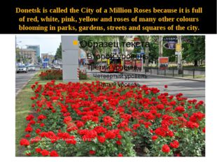 Donetsk is called the City of a Million Roses because it is full of red, whit