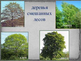 деревья смешанных лесов осина липа клен ольха