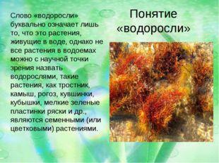 Понятие «водоросли» Слово «водоросли» буквально означает лишь то, что это рас