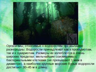 Организмы, относимые к водорослям чрезвычайно разнородны. Водоросли принадле
