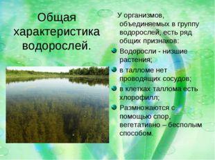 Общая характеристика водорослей. У организмов, объединяемых в группу водоросл