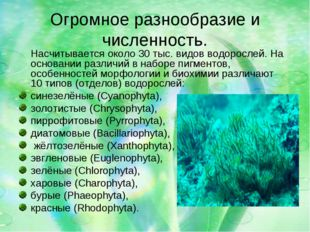 Огромное разнообразие и численность. Насчитывается около 30 тыс. видов водоро