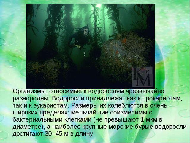 Организмы, относимые к водорослям чрезвычайно разнородны. Водоросли принадле...