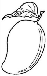 mango-coloring-pages