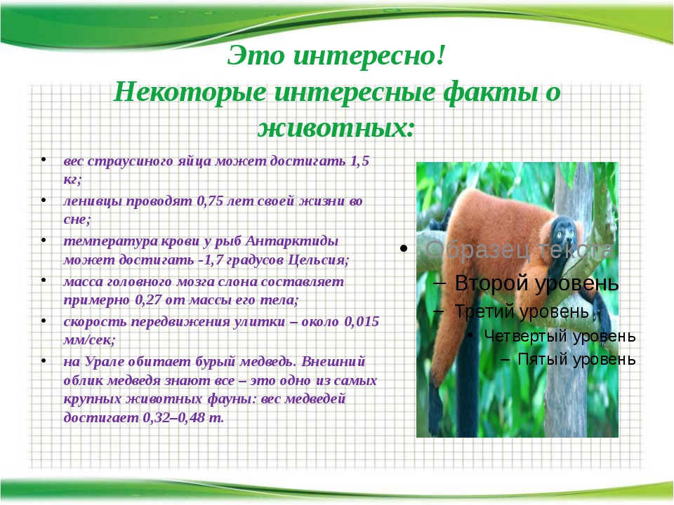 Это интересно! Некоторые интересные факты о животных: вес страусиного яйца мо...
