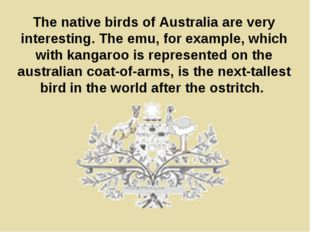 The native birds of Australia are very interesting. The emu, for example, whi