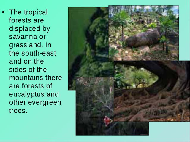 The tropical forests are displaced by savanna or grassland. In the south-east...
