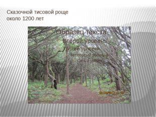 Сказочной тисовой роще около 1200 лет