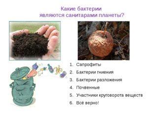 Какие бактерии являются санитарами планеты? Сапрофиты Бактерии гниения Бактер