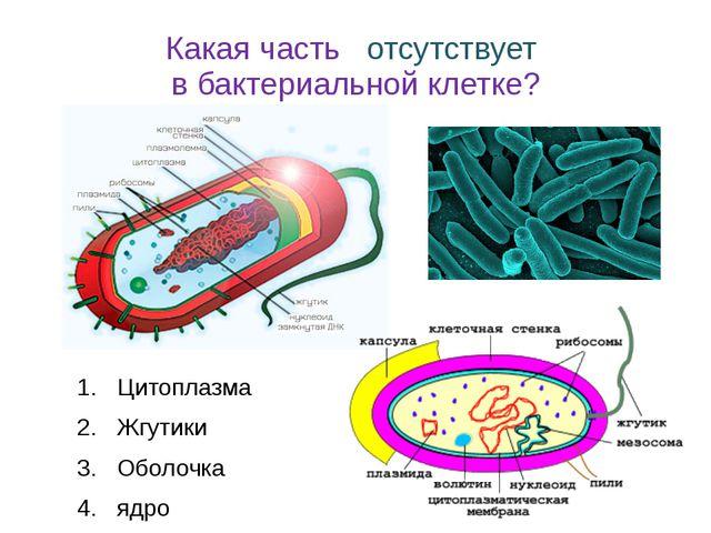 Какая часть отсутствует в бактериальной клетке? Цитоплазма Жгутики Оболочка я...
