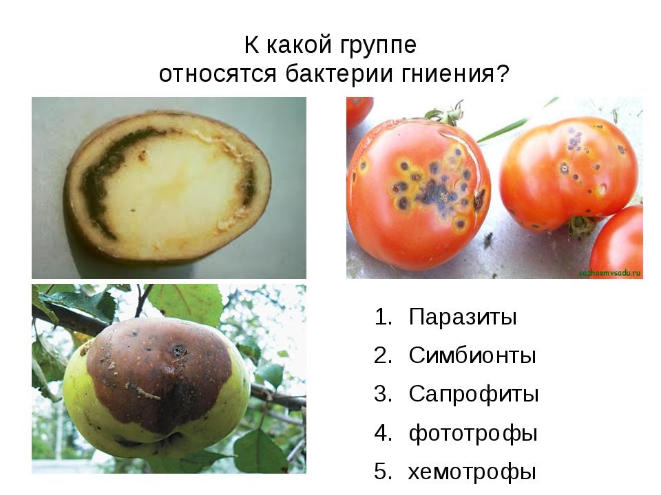 К какой группе относятся бактерии гниения? Паразиты Симбионты Сапрофиты фотот...