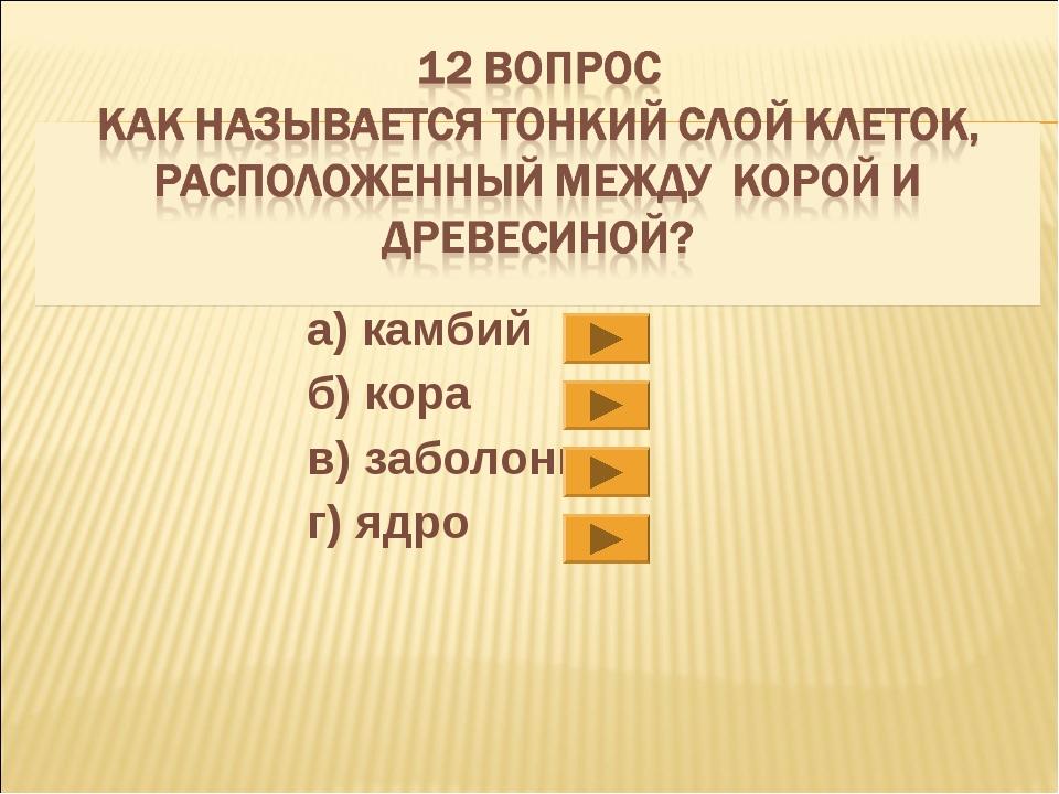 а)камбий б)кора в) заболонь г)ядро