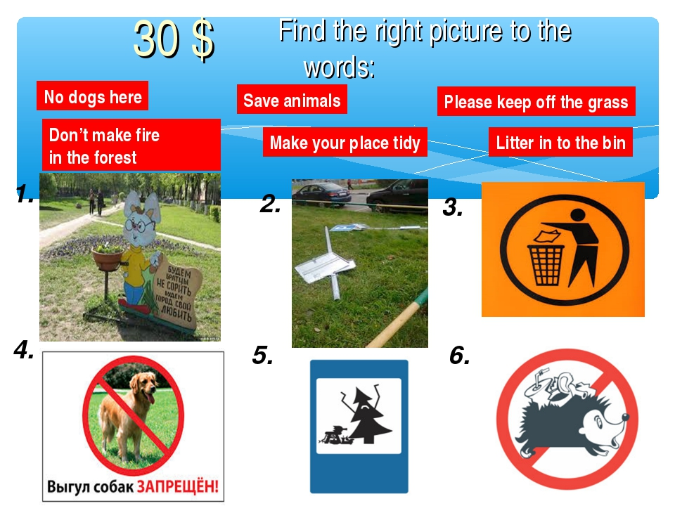 1. 2. 3. 4. 5. 6. No dogs here Save animals Please keep off the grass Litter...