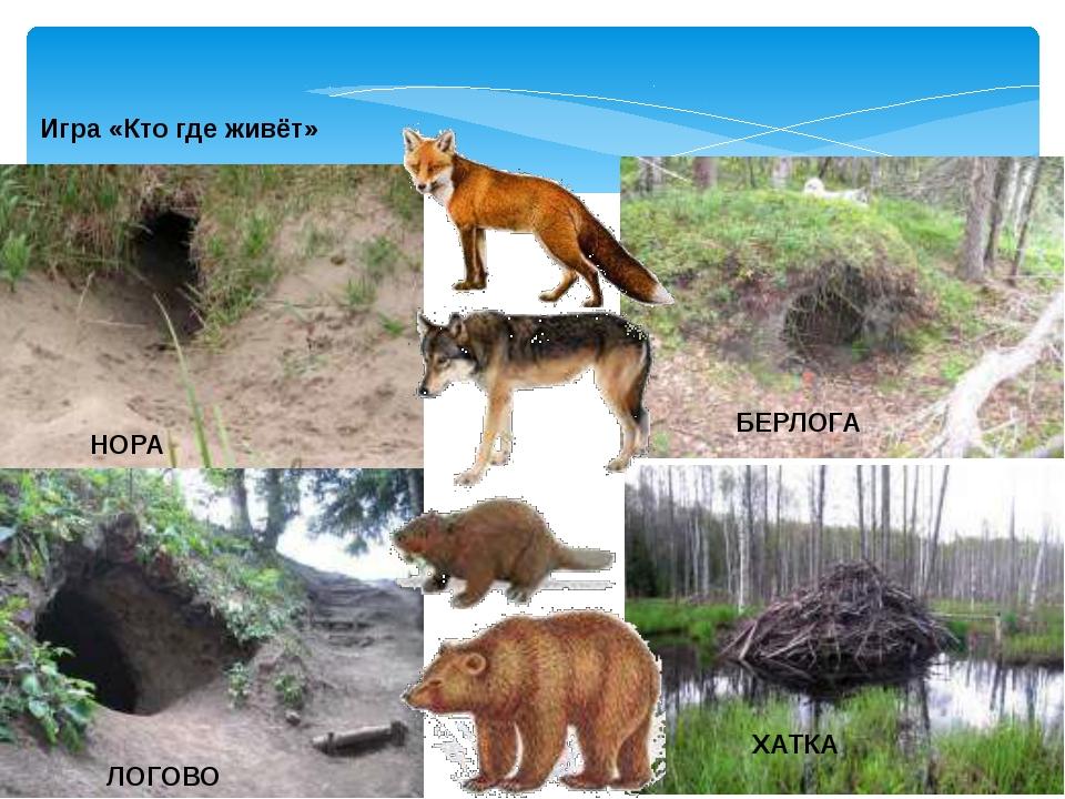 Жилища диких животных в картинках