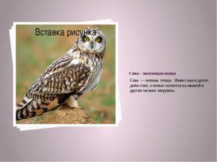 Сова – зимующая птица Сова — ночная птица. Живет она в дупле, днём спит, а но