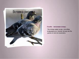Голуби – зимующие птицы. Эти птицы живут везде, способны возвращаться к своем