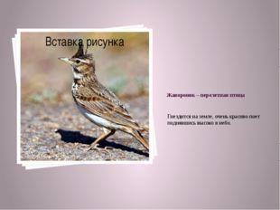 Жаворонок – перелетная птица Гнездится на земле, очень красиво поет поднявшис