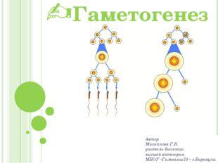 Гаметогенез Автор Михайлова Г.В. учитель биологии высшей категории МБОУ «Гимн