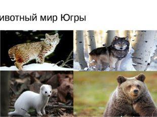 Животный мир Югры