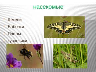 насекомые Шмели Бабочки Пчёлы кузнечики