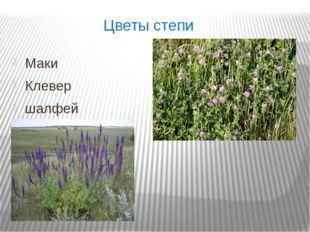 Цветы степи Маки Клевер шалфей